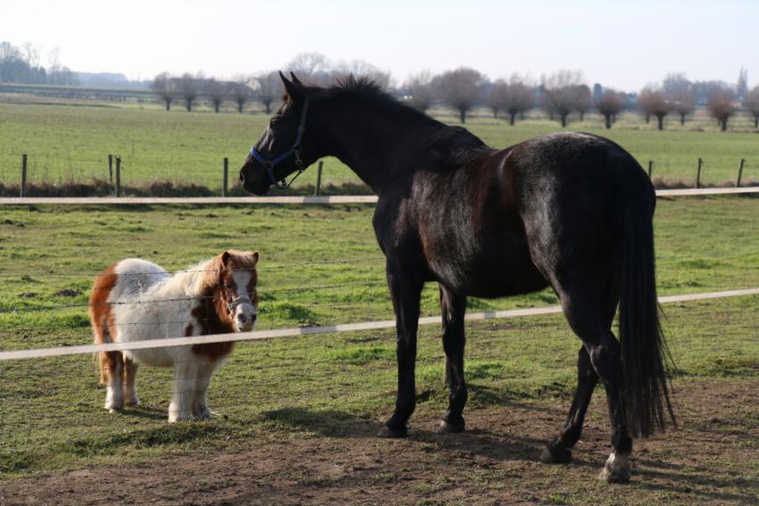 Marieke Kersten Life Coaching paardencoach